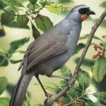 Tìm thấy loài chim tưởng đã tuyệt chủng